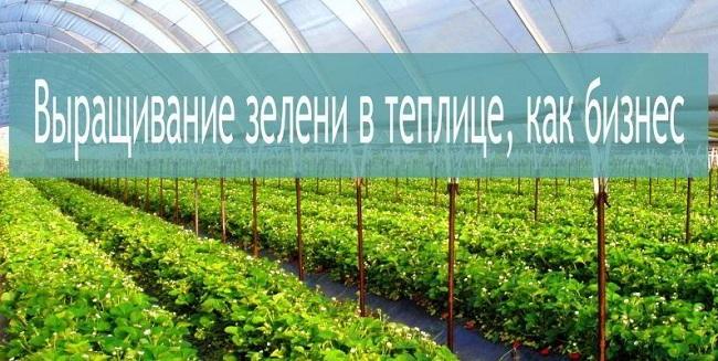 Бизнес-план по выращиванию овощей и зелени в теплицах